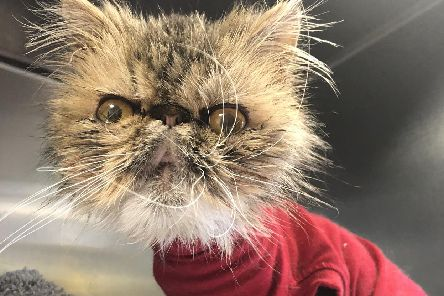 On Christmas Day 2018, the RSPCA received 934 calls to its cruelty line - the highest number for five years. Pic: RSPCA