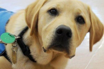 Owners of assistance dogs have rights to access services under equality legislation