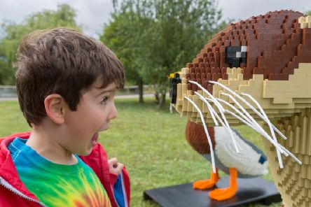 A visitor to the Lego trail. Credit: WWT