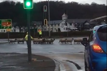 Firefighters spent two hours rescuing a flock of 170 sheep from rising flood water after the River Ribble burst its banks in Preston. Credit: Kate Fulwell