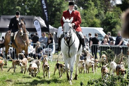 Horses and hounds at 2019's Myerscough College Open Day and Country Fair