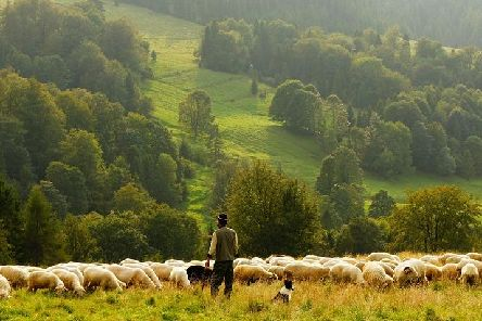 Farming can be a stressful and lonely job. Stock picture.