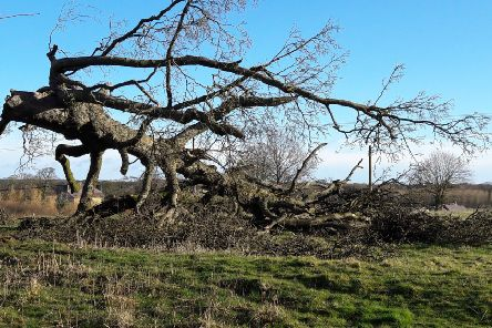 Kate Thick says there are tons of felled wood lying about rural Northumberland that could be used for a potential log bank.