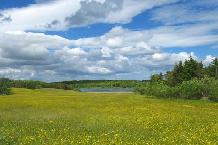 Druridge Bay Country Park. Picture by Anne Hopper