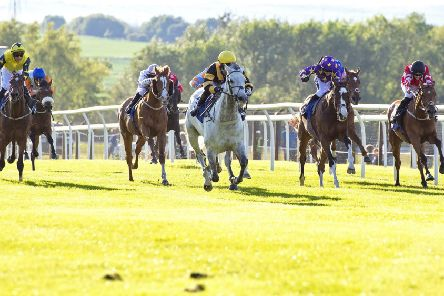 Champagne Rules wins a thrilling finish at Pontefract. Picture: Alan Wright
