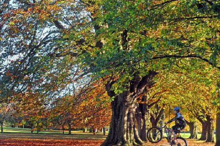 Cycling on the Stray in Harrogate. Picture: Tony Johnson.