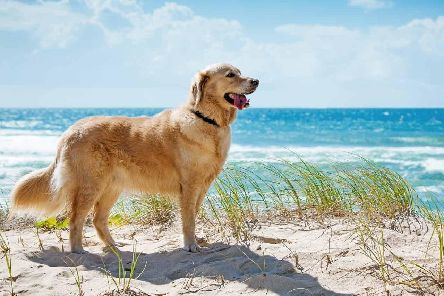 Taking your pet abroad involves a lot of cost and consideration