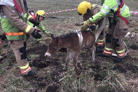 The foal being rescued. Picture c/o County Durham and Darlington Fire and Rescue