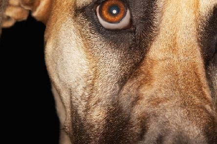 There are a number of factors that influence how much stress each dog can deal with.