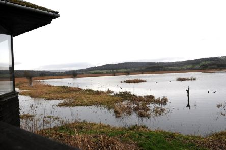 National Lottery players can enjoy a free day out at RSPB's Leighton Moss Reserve