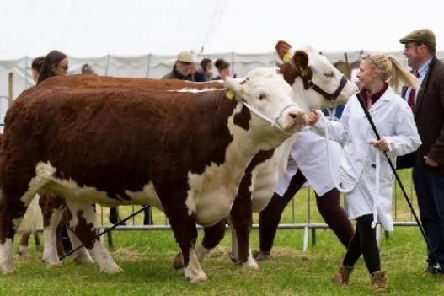 Baa-rilliant fun for all at 88th annual Todmorden Agricultural Show