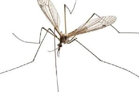 Daddy Long Legs only live for 10 to 15 days so they have to quickly search for a mate so the females can lay eggs.