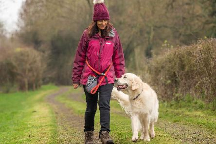 Bailey the golden retriever out for a walk with his owner. A new survey has shown north west dog owners walk on average more than 18 miles a week exercising their dogs.