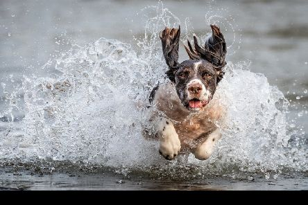 'Sea Dog' by Mark Clayton, one of the successful photos at the competition.
