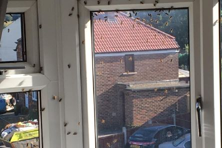 Around hundreds bees are said to be in the living room. Photo provided by Melanie Wright.
