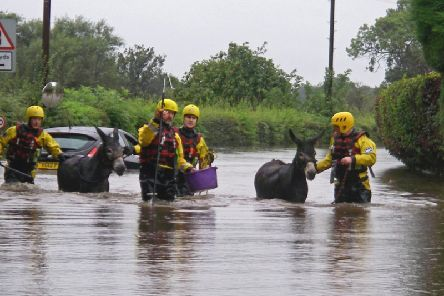 Thousands of people and animals were forced to leave their homes because of the flooding across South Yorkshire and Derbyshire