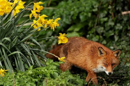 Do you agree with this reader when it comes to the hunting of animals such as foxes? Photo: Brian Lawless/PA Wire