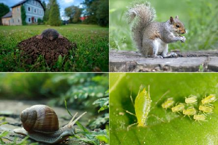 Gardens can be a natural habitat for many species of animals, but some can be a nuisance, causing damage to plants, flowers, home-grown vegetables and lawns