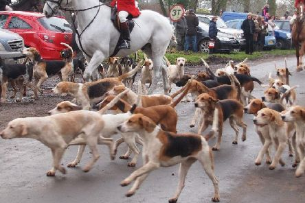 Since the season began the League Against Cruel Sports has had 282 reports of suspected illegal hunting
