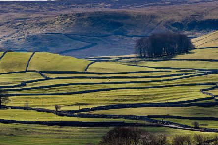 A significant number of agri-environment scheme agreement holders have not received full payment for work they have undertaken. Picture by James Hardisty.