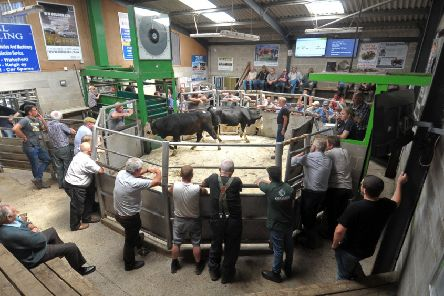 Summer show and sale of livestock,  sheep and cattle at Holmfirth Attested Auction Mart.