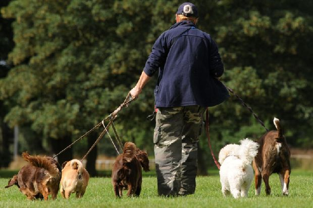 Warning to dog walkers as meat laced with sharp tacks found in Calderdale parks