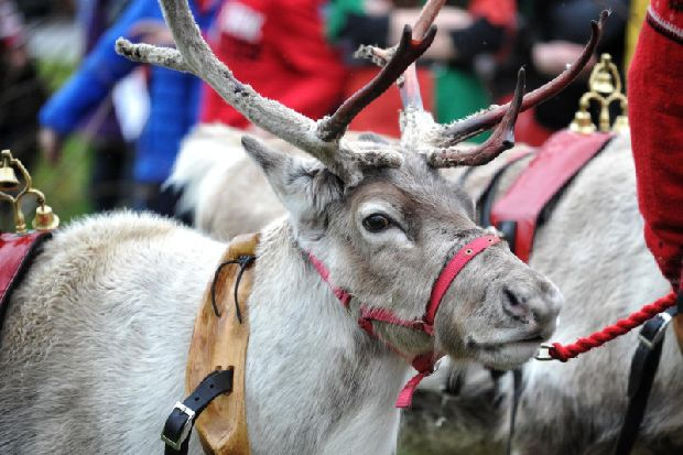 In pictures: Santa and his reindeer parade through Wigan - Wigan Today