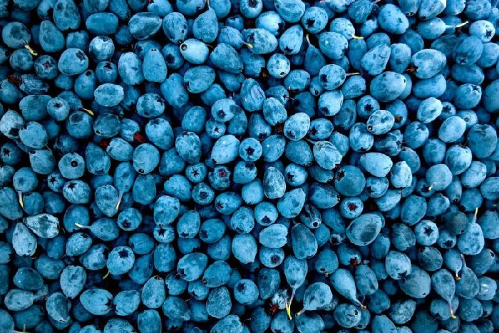 Berries are one of the foods to go for