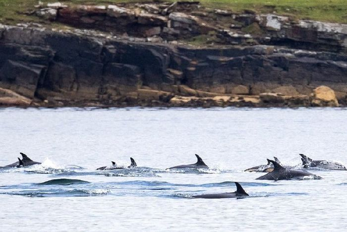 d010c4fa27a0 Atlantic white-sided dolphins sighted on August 3. Photo credit  Hugh  Harrop