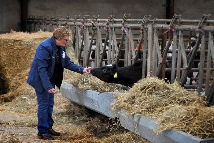 Dairy farmer Elaine Butterfield with Holstein calf at Linghaw Farm in High Bentham. Credit: Tony Johnson