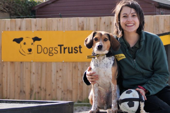 Dogs' charity that takes 138 calls a day to rehome unwanted pets