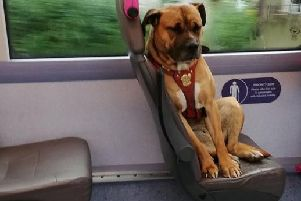 This dog boarded a bus all on her own after she was apparently abandoned by her owners. Picture: Gemma Burton