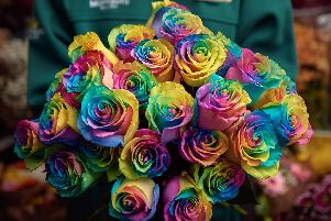 Morrisons florists are celebrating all types of lovers by launching one of the UKs most colourful flowers