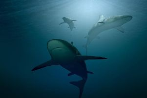 A generic picture of sharks used for illustrative purposes.