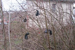 The unsightly poo bags flung into trees in Meersbrook.