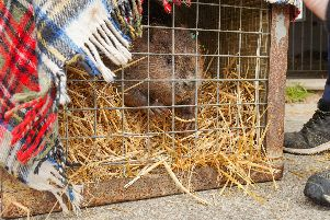 A beaver in a crate from Flamingo Land