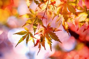Meteorological autumn started on September 1 and ends on November 30.