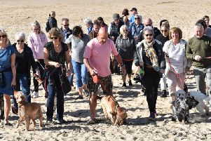 Spaniel owners and their dogs enjoy the stroll from Starr Gate to St Annes Pier