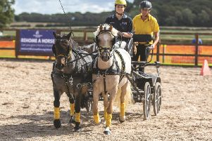 Graham, right, made a great recovery. Picture by World Horse Welfare