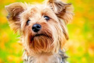 New study finds clever dogs can recognise what their owners and other people are saying to them