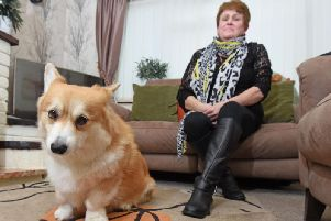 Corgi Benton with owner Judith Smithson