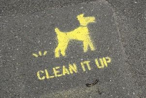 Is your area plagued by dog owners who can't be bothered to clean up after their pets?