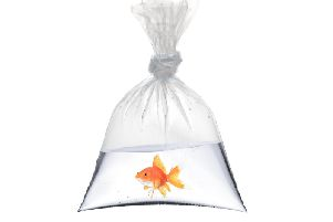 Much like winning a goldfish at the fair, the excitement of having a baby soon passes and the begging for food begins
