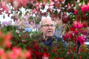 A visitor takes in the stunning display of fuchisias in the Floral Marquee.