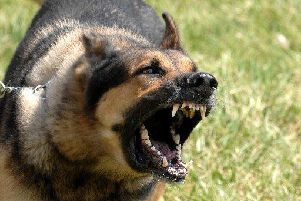 Dog attacks have risen in the Ribble Valley