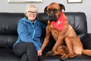 Dog Scooby donates blood with the Pet Blood Bank.  He is pictured with owner Anne Pratt.