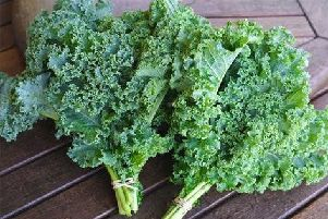 Kale thrives in the winter months