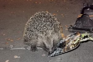 The hedgehog with some of the debris after the car crash (Picture WYP_RPU)