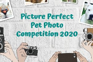 Calling all cute pets for RSPCA's photography competition