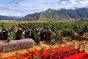The Pure Land & Super-high altitude vineyard in Tibet  the highest in the world  Photo: The Guinness Book of World Records  and www.thedrinksbusiness.com